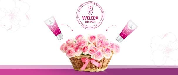 weleda_rose